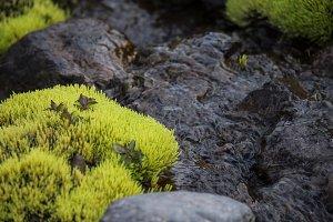 Neon Green Moss #01