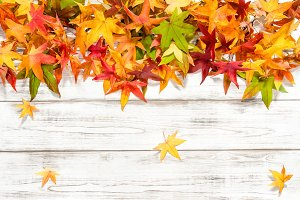 Autumn leaves background Floral bord