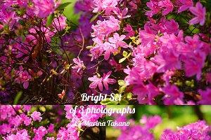 Bright Azalea