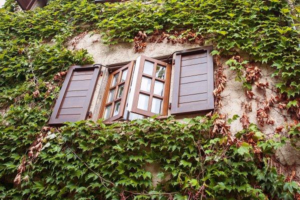 Architecture Stock Photos: Wildstrawberry Magic - Saint-Paul-de-Vence. France, Provenc
