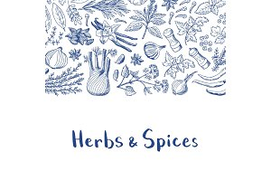 Vector hand drawn herbs and spices