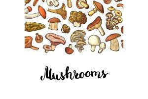 Vector hand drawn mushrooms