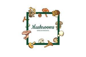 Vector hand drawn mushrooms. Menu