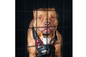 Punishment of a dangerous dog