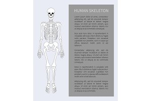 Human Skeleton Text Banner Vector