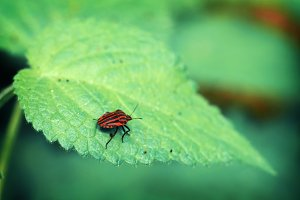 Insect on a Leaf