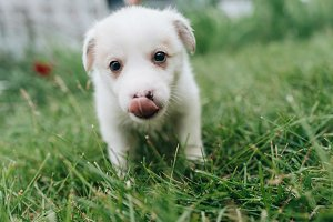 Mix Puppy sitting on the grass