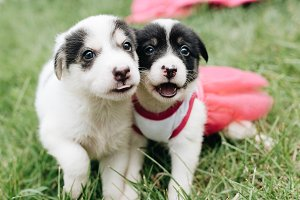 Mix Puppies playing on the grass