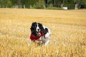 dog have haystack
