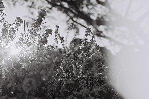 Film photo - black & white flowers