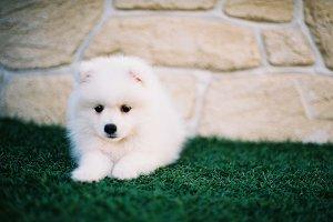 Cute Dog Film Photo