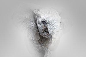 Elephant Charging fine art
