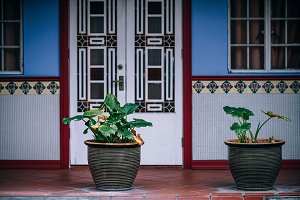 Flower Pots in Front of a Facade