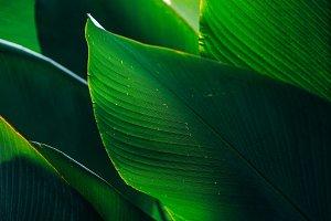 Giant Lushfull Leaves Inside Garden