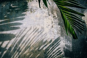 Tropical Shadows on a Weathered Wall