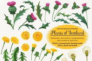 Plants of Scotland. Watercolor