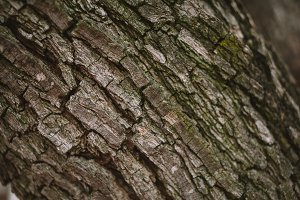 Rustic Green Bark Background Photo