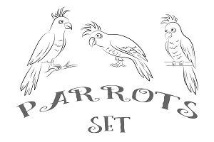 Parrots Contours