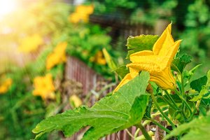 Decorative pumpkin flowers