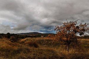 Autumn landscape panorama, grey sky