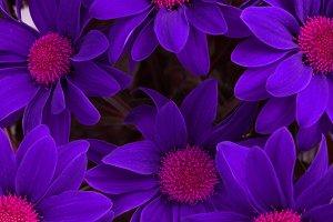 Violet flower background.