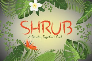Shrub Brushy Font