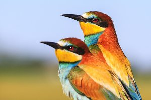 couple of exotic colored birds