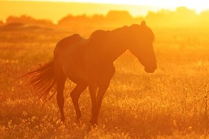 Silhouette of a horse in the field