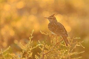 wild bird among the weeds at sunset