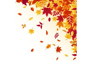 Autumn falling leaves. Nature