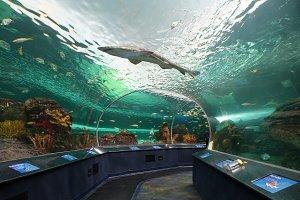Toronto Ripleys Aquarium