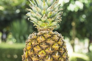 tropical summer fruit, pineapple on