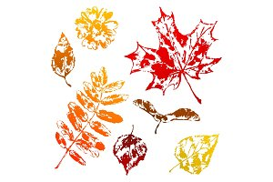 Set of printed leaves.