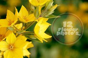 12 Flower photo's