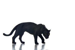 Black panther portrait  white backgr