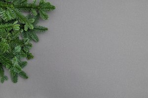 Christmas tree branches grey backgro