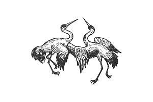 Dancing storks birds animal vector