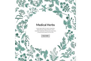 Vector hand drawn medical herbs