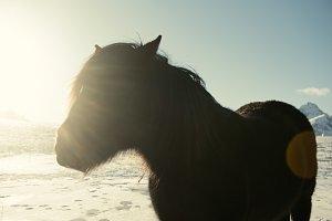 Norway sunny horse