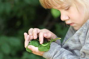 A little girl examines the insect
