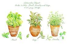 Watercolor Clipart Herbs in Pot