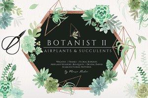 Botanist II - Airplants & Succulents