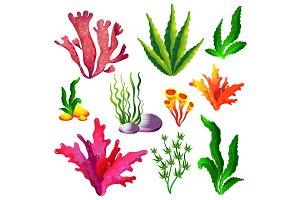 Set of colorful sea algae