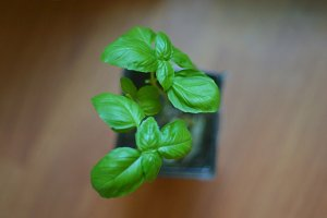 Basil from Above