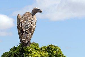 Vulture on tree