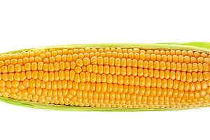 ear of corn isolated on a white