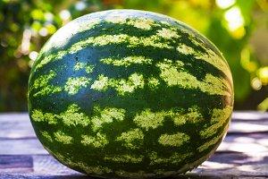 ripe green round watermelon