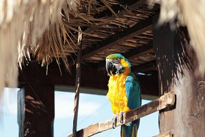 Macaw parrot.