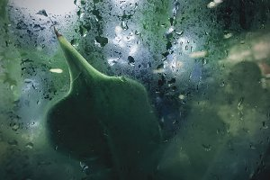 Raindrop on glass window