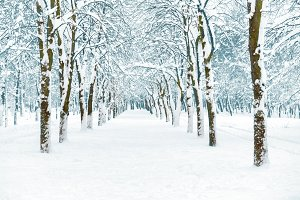 Snow park with white trees